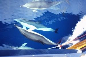 En compañía de los incansables delfines. Fotografía: Alfonso Hernández